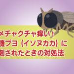 磯ブヨに刺された症状と治療法・薬 イソヌカカの活動時期は?虫よけは効く?